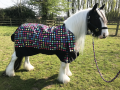 Horsewear/Tack